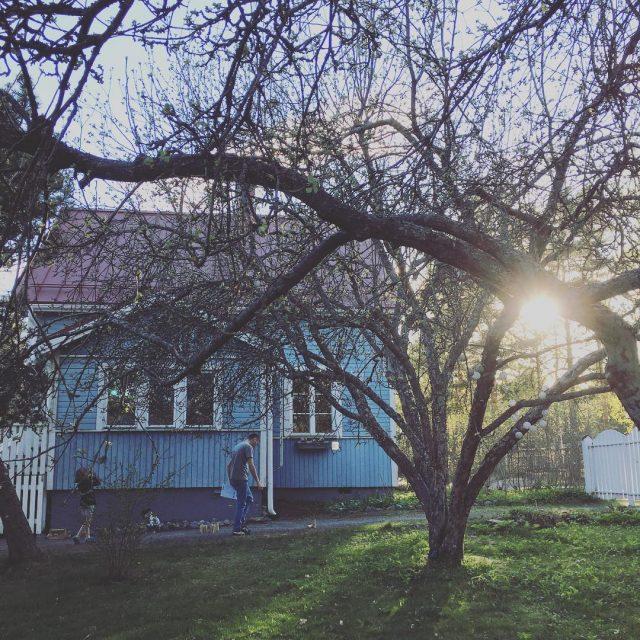 Niin ntti kesilta mlkky puutalo puutarha woodenhouse garden appletree