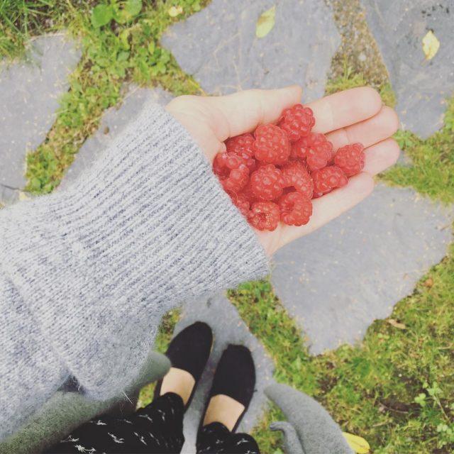 aamupalaa vadelmat puutarha sadonkorjuu rasberry freshfromgarden