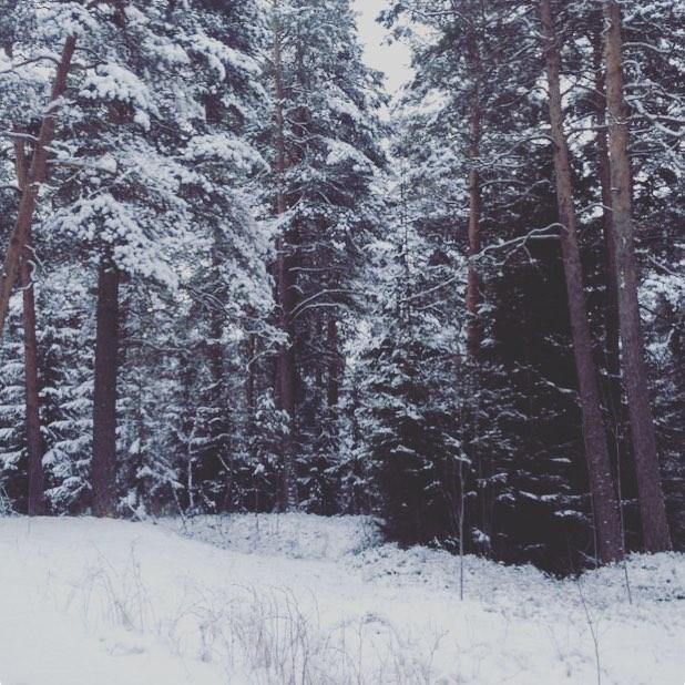 Viel eilen oli valkoiset puut mets kauppi kaupinmets tampere finnishnature