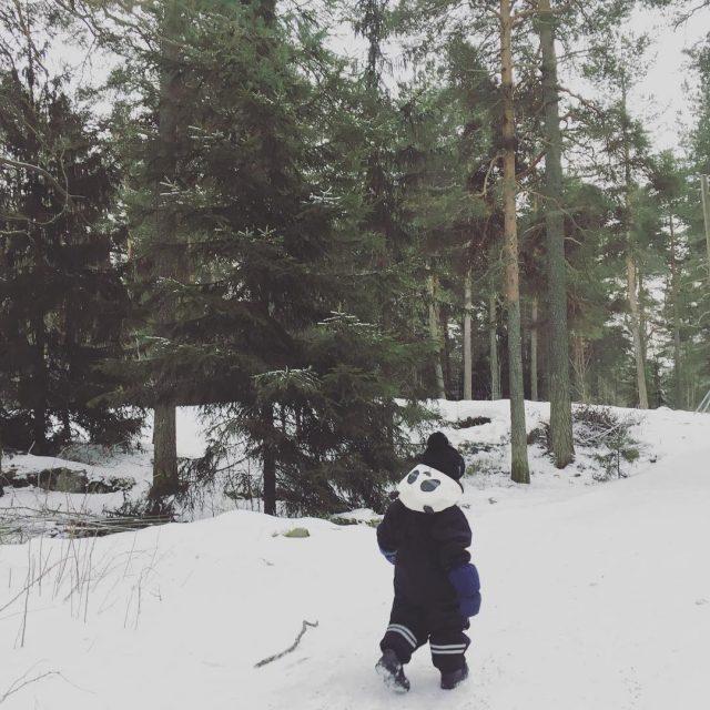 Pandahavainto kauppi mets pakkaspiv minirodini