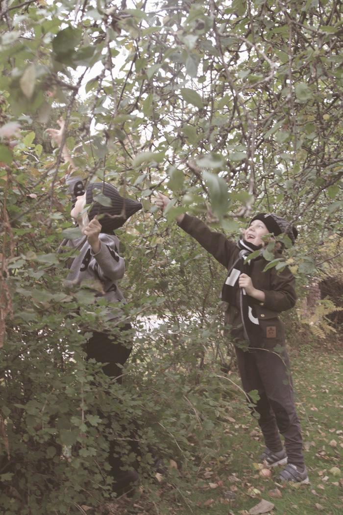 pojat-omenapuu